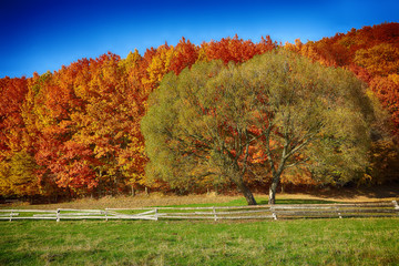 Country scenery on late autumn season