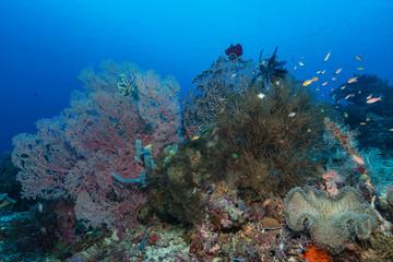 Buntesw Korallenriff