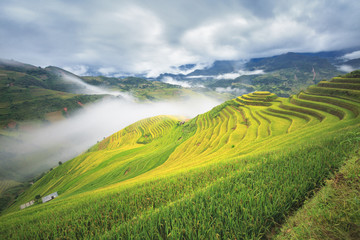 landscape of step rice field and flowing of fog in mountain hill