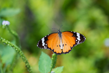 Beautiful butterfly with colorful wings on flower and green leaves in the nature background