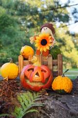 Small decorative pumpkins - as an autumn decoration for Halloween