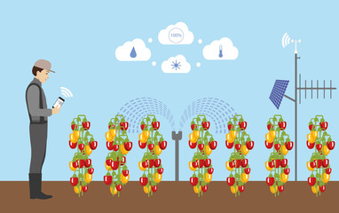 Wall Mural - Internet of things in agriculture. Smart farm for growing pepper with wireless control.  Vector illustration.