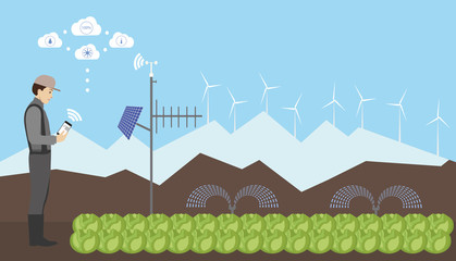 Wall Mural - Internet of things in agriculture. Smart farm for growing  cabbage with wireless control.  Vector illustration.