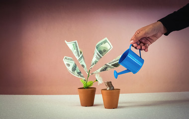 Human hand with a pot watering growing money tree.