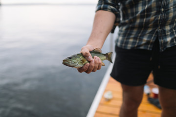 A small fish caught from a lake in Canada