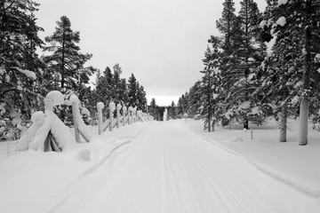 snowy winter road flanked by fir trees black and white