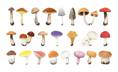 Obraz Edible mushrooms set. - fototapety do salonu