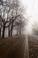 snowy winter city park in mist