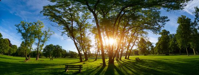 Sunlight through the trunks of trees. Morning in the summer park