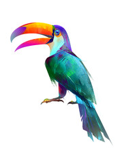 drawn isolated bright bird sitting Toucan side