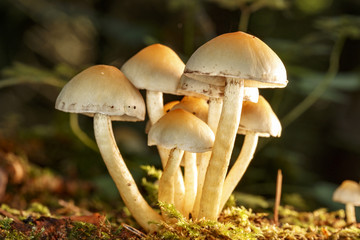 Mushrooms in the forest floor