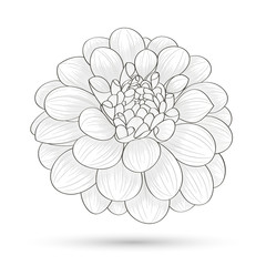 Hand-drawn flower dahlia. Element for design. Abstract floral background.