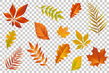 Autumn falling leaves isolated on transparent background. Vector illustration. Wall mural