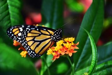 Профиль Бабочка На Цветке