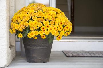Bucket of yellow asters on the doorstep, birthday, welcome