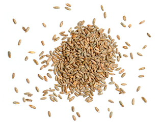 Rye Grain on White Background
