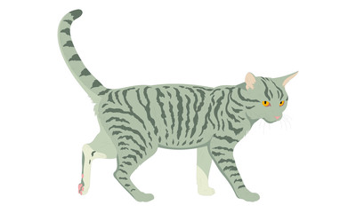 Illustrated striped grey cat isolated on white background