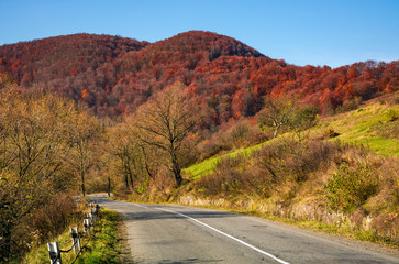 trees by the road in late autumn countryside. dangerous transportation area in mountains