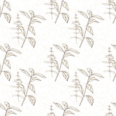 Vector floral seamless pattern with wild meadow  herbs . Thin delicate line silhouettes in small bouquets on geometric background.