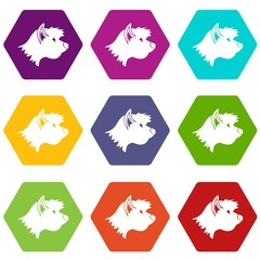Terrier dog icon set color hexahedron