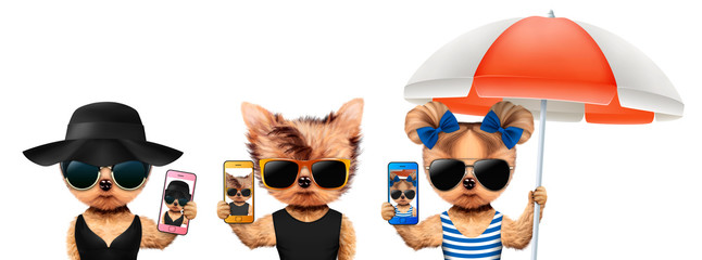 Animals taking selfie in sunglasses. Vacation concept