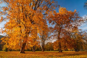 Autumn landscape, castle park Budatin nearby Zilina, Slovakia, central Europe Zilina.