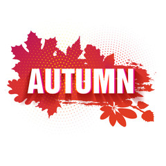 Template for the design of a horizontal banner for the autumn season. Sign with text fall on a red background with a decor of a silhouette of maple leaves and oak. The natural label. Vector.