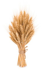 Bushy sheaf of wheat isolated on white background