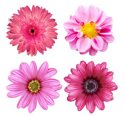 collection pink flower isolated on white background