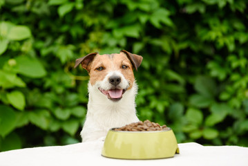 Dog behind table with bowl full of dry food Wall mural