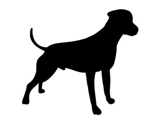 isolated one silhouette of a dog