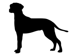 vector, isolated one silhouette of a dog