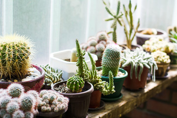 Papiers peints Cactus Potted cactus plants next to big window