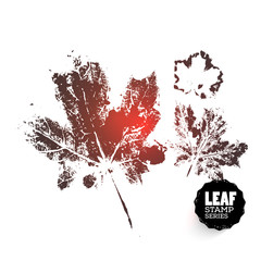 Vector design template. Ink splashes element from nature series. Maple Leaf print. Hand made Ink stamp of a leaf. Seasons changing. Three variants of print