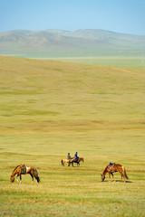 Horses Grazing Grass Mongolian Steppe
