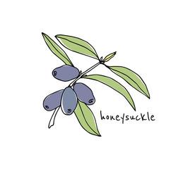 Hand drawn honeysuckle