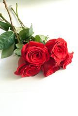 Mazzo di rose rosse su sfondo bianco