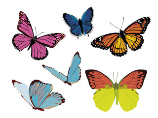 set of color bright butterflies