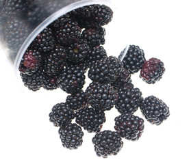 blackberry berries on white background