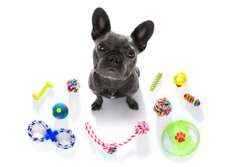 Foto auf AluDibond Crazy dog dog with pet toys