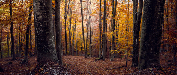 Beautiful warm colors in a forest during autumn