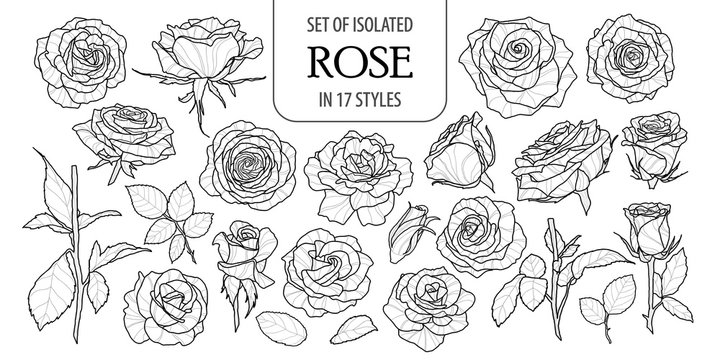 Set of isolated rose in 17 styles. Cute flower illustration in hand drawn style. Black outline and white plane on white background.