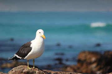 Seagull sitting on rocky shores