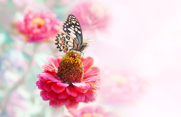 Delicate elegant light natural background  template with pink flowers and a butterfly close-up macro for congratulations in pastel colors.