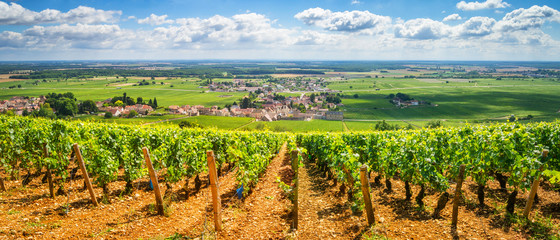 Fotorolgordijn Wijngaard Vineyards of Burgundy, France