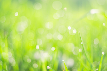 blue green bokeh background, nature background from grass on morning with sun and dew in meadow.