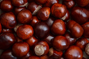 Chestnuts autumn background fall retro photo 5