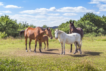 Group of horses in various colors