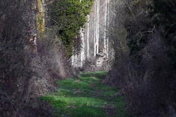camino misterioso