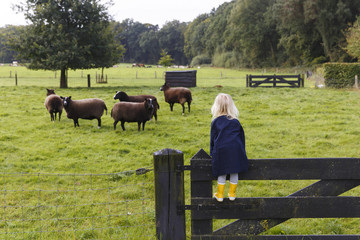 Delden, The Netherlands. A young girl wearing yellow boots climbs up a fence to look at some sheep.